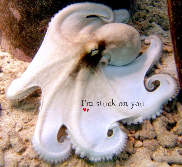 Valentine ecard free octopus im stuck on you