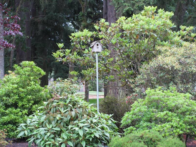 TacomaTurf: Bird Houses??????