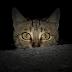 Los cadáveres de milenarios gatos egipcios que terminaron siendo abono para alimentos ingleses