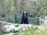 ursi polari mai nealbi, plini de namol