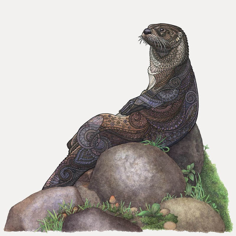 15-Otter-Z-H-Field-Distinctive-Animal-Drawings-and-Paintings-www-designstack-co