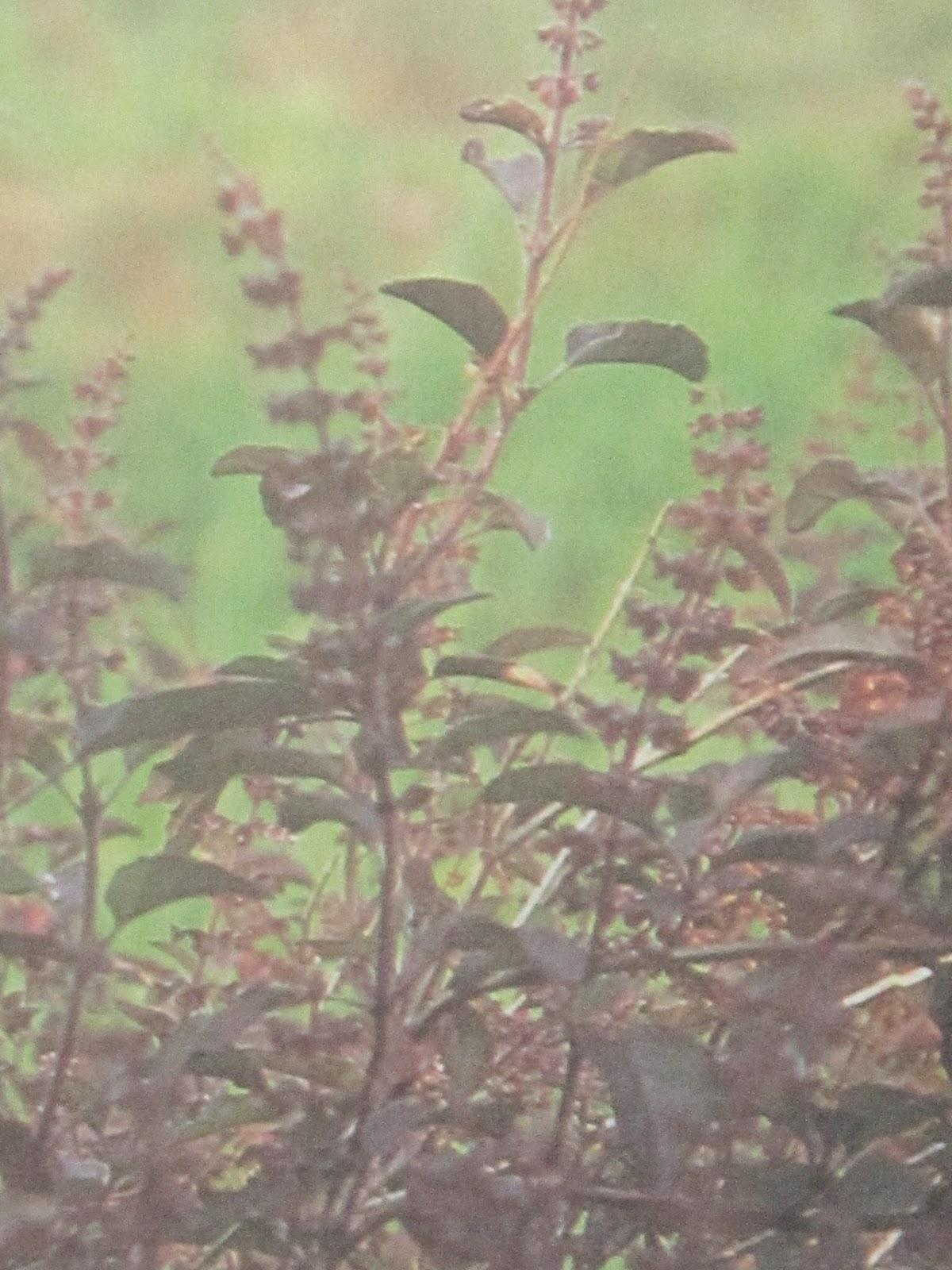 herbal leaves, herbal medicine plants and treatments ...