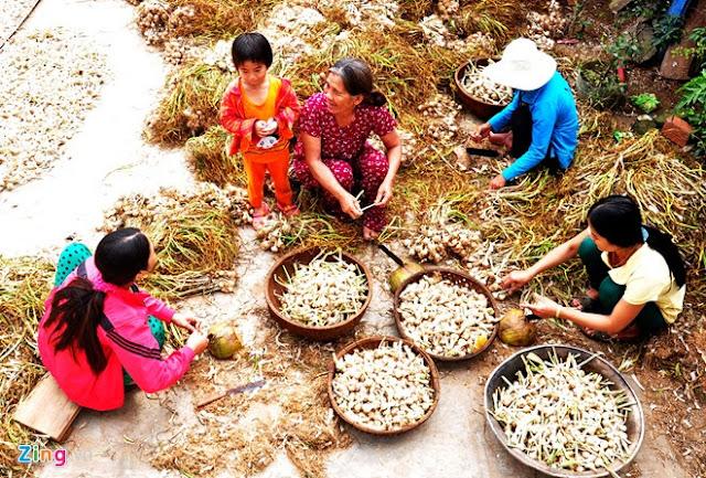 Chợ tỏi 4h sáng trên đảo Lý Sơn - Hình 14