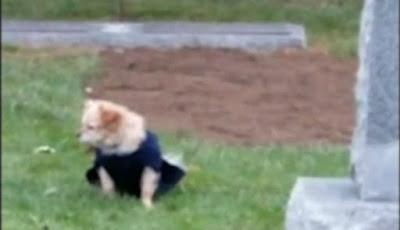 anjing jaga makam
