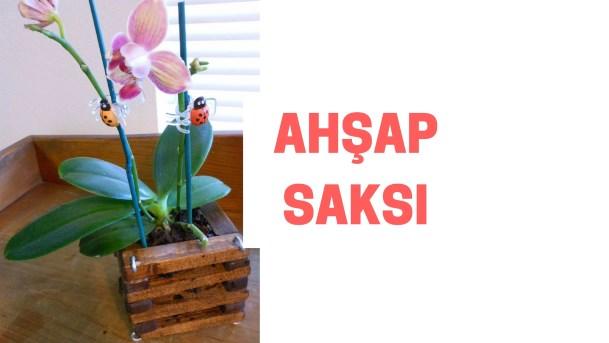 ahşap orkide saksısı