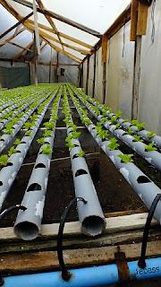 que es la hidroponía agricultura