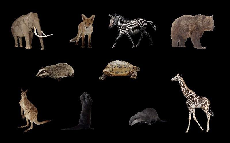 8500 Gambar Binatang Dan Namanya Dalam Bahasa Inggris Gratis Terbaru