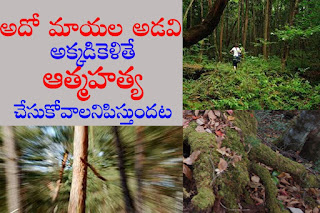 Suicide forest | మాయల అడవి | ఆత్మహత్య
