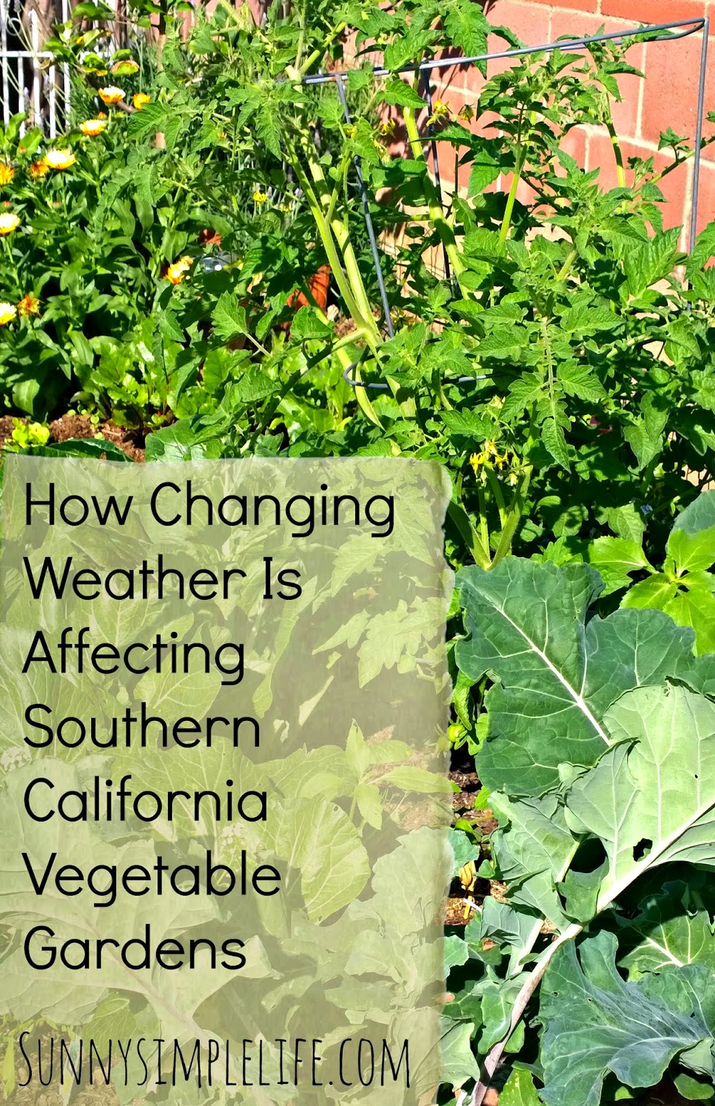 How Changing Weather Is Affecting Southern California Vegetable Gardens