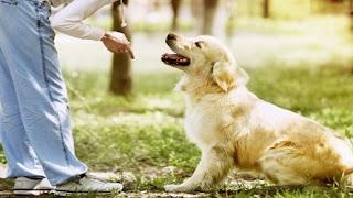 Buscando cursos de entrenamiento para perros de bajo costo