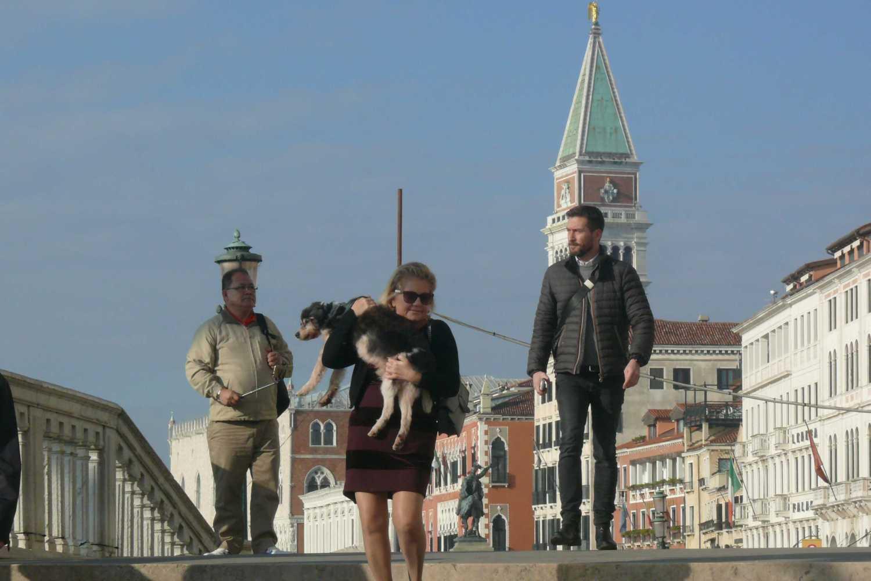 Papierowe Ogrody Wenecja I Psy