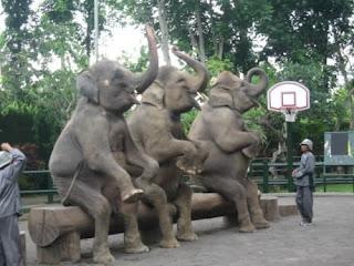 Pusat Konservasi Gajah Taman Nasional Way Kambas Lampung