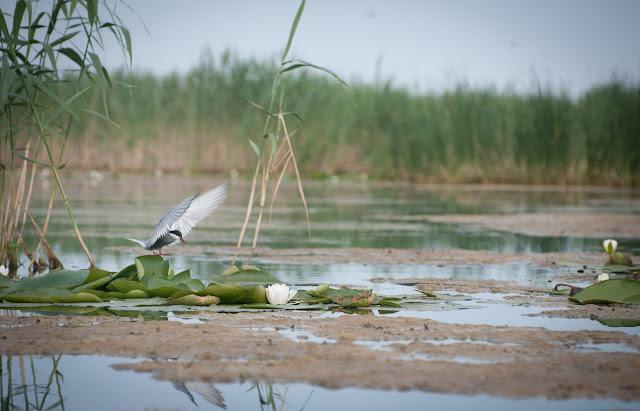 Chira pe-un lac din Parches