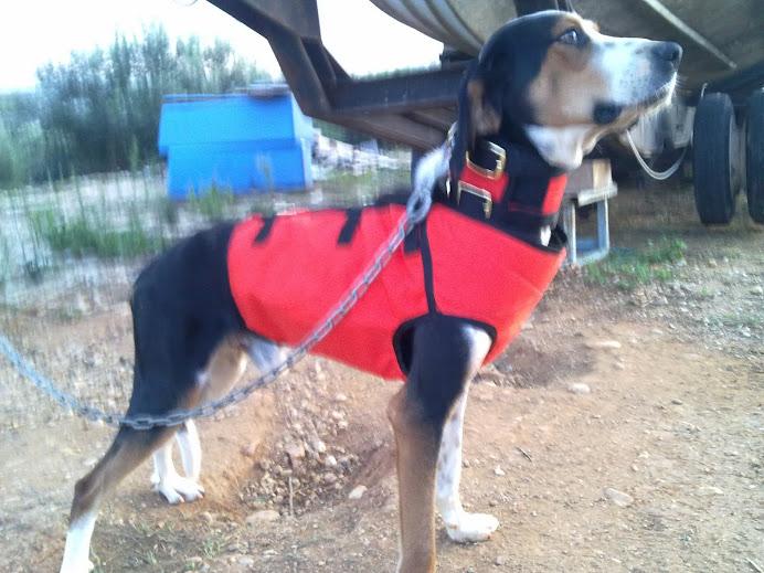 4982f01aa γιλεκα σκυλων ,γιλεκο προστασιας σκυλων αγριογουρουνου,gps garmin ...