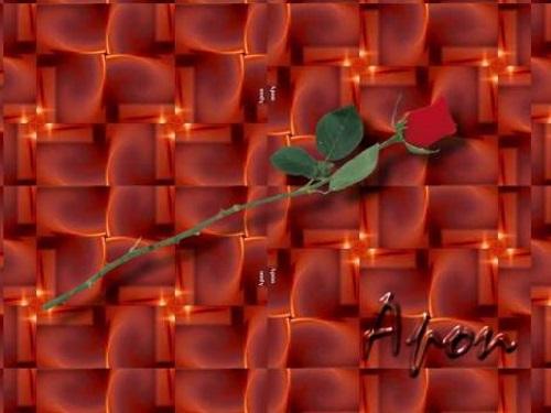 Rosa sobre fractal.