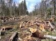 Pengertian Illegal Logging Menurut Ahli