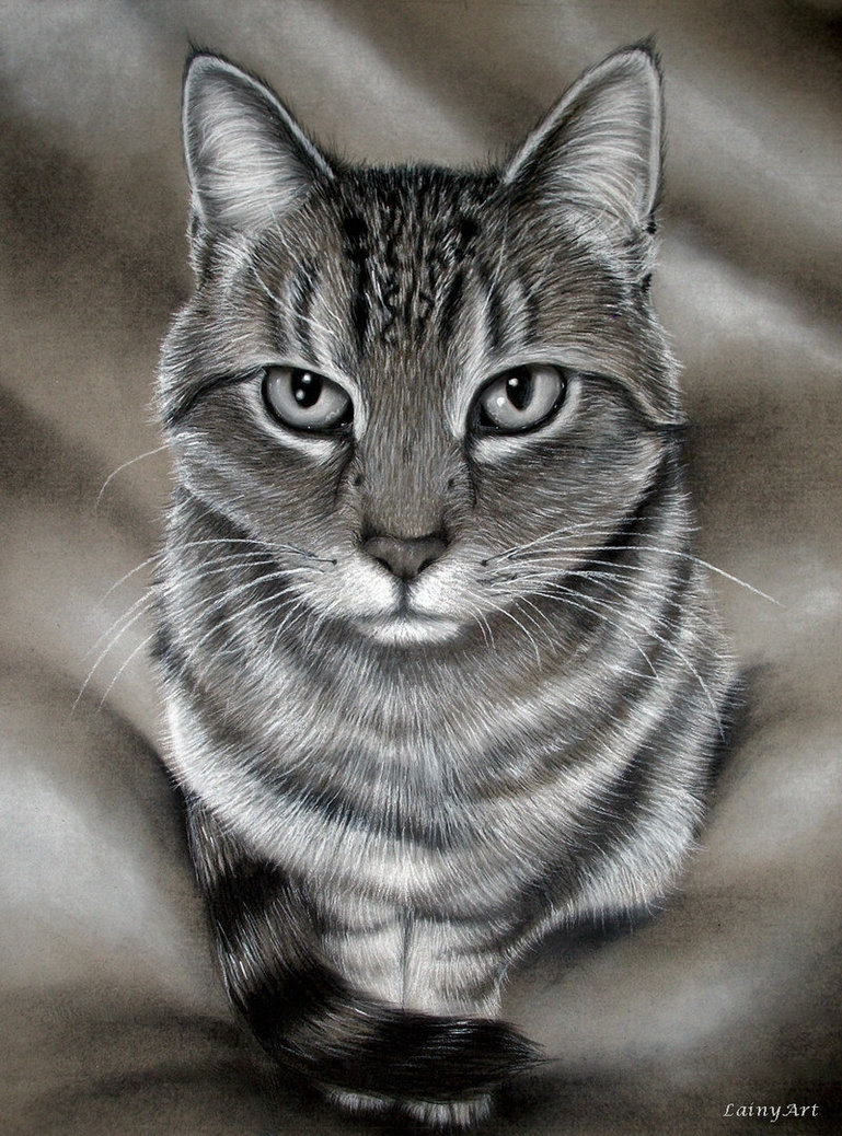 08-Kitty-Commission-Alaina-Ferguson-Lainy-Animal-Charcoal-Portrait-Drawings-www-designstack-co