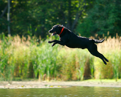 dog jumping pond happy