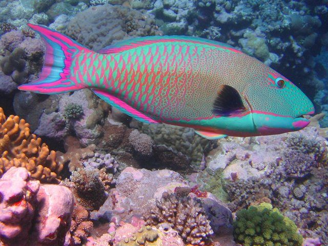 Gambar Ikan di Laut