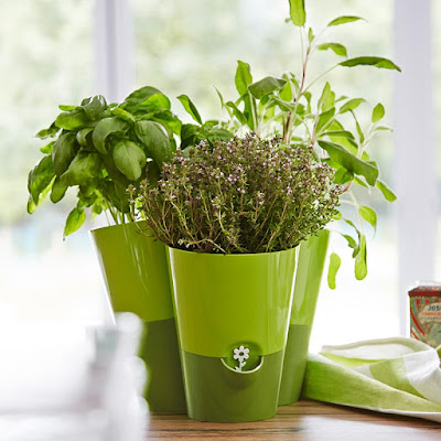 Fresh Herbs smart planter