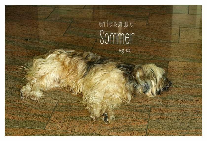 Tibet Terrier Chiru liebt im Sommer die kühle Fliesen