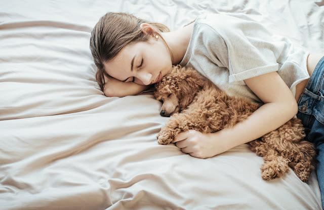 Bahaya Tidur dengan Anjing Untuk Kesehatan