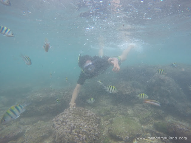 Saya Snorkeling di Pantai Nglambor 6
