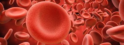 Illustrasi darah (Image : bornrealist.com)