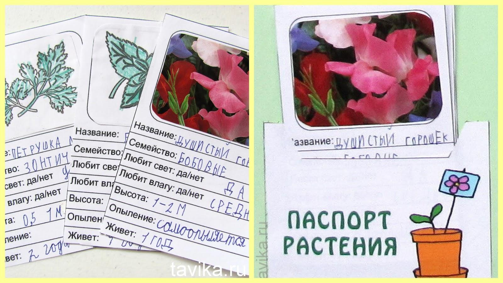 Lapbook plants