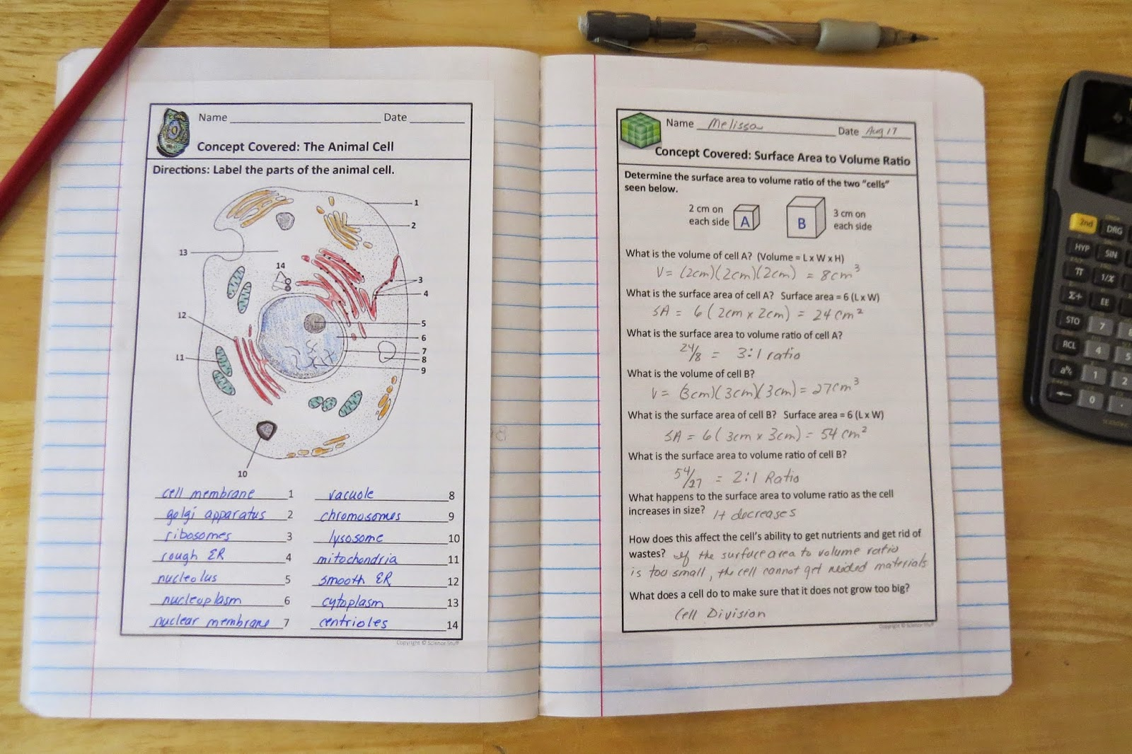 mitosis interactive notebook three hands on activities