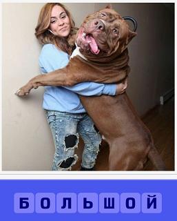 девушка около стены и стоит большая собака на задних лапах в рост с девушку