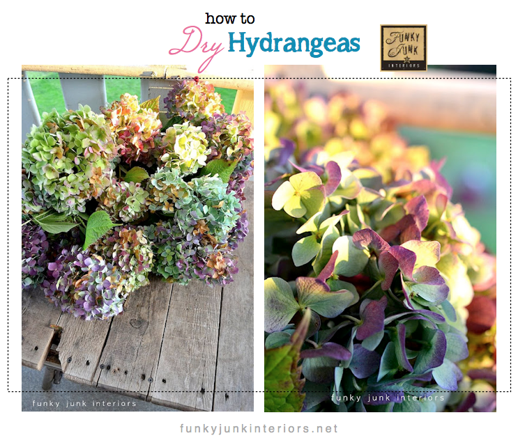 How To Dry Hydrangeas With Wilt Free Petals
