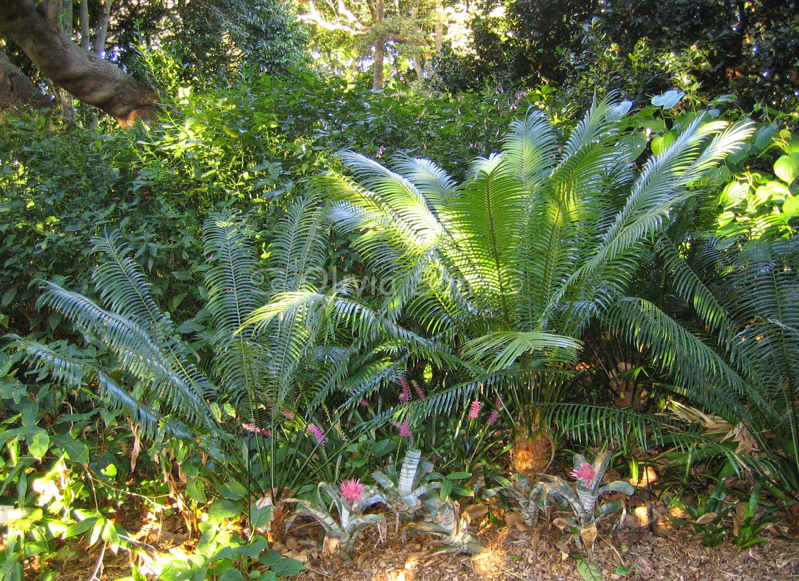 Royal Botanic Gardens, Sydney, Australie