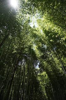 Mt Arashiyama Bamboo Forest