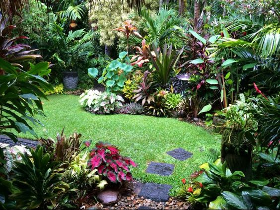Moon to moon small jungle style gardens for Jungle garden design ideas