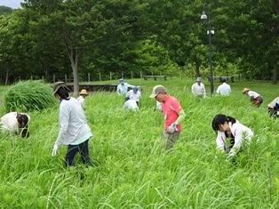 外来植物抜取りボランティア募集