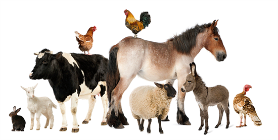 hewan ternak yang ada dibumi