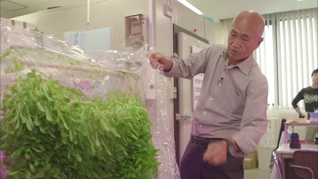 الزراعة بدون تربة في اليابان