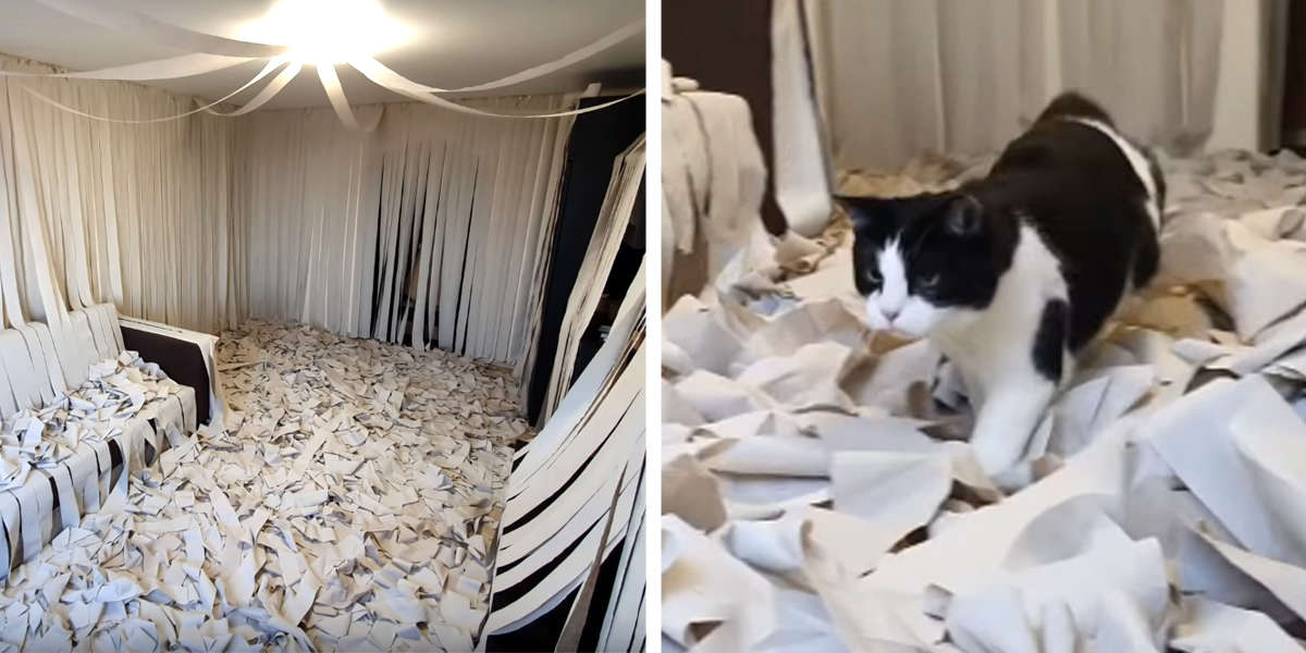 Guy Surprised His Cat With A Room Full Of Toilet Paper