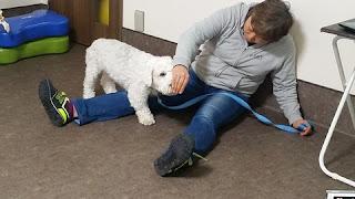 fortalecimento muscular com cães
