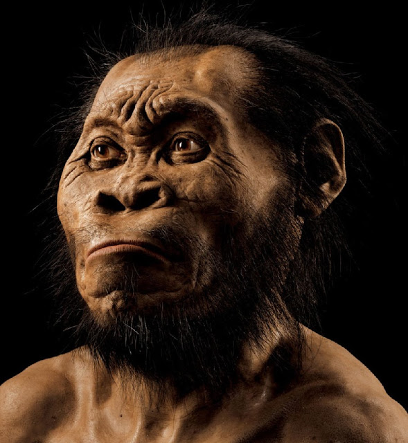Primitive hominid lived alongside modern humans