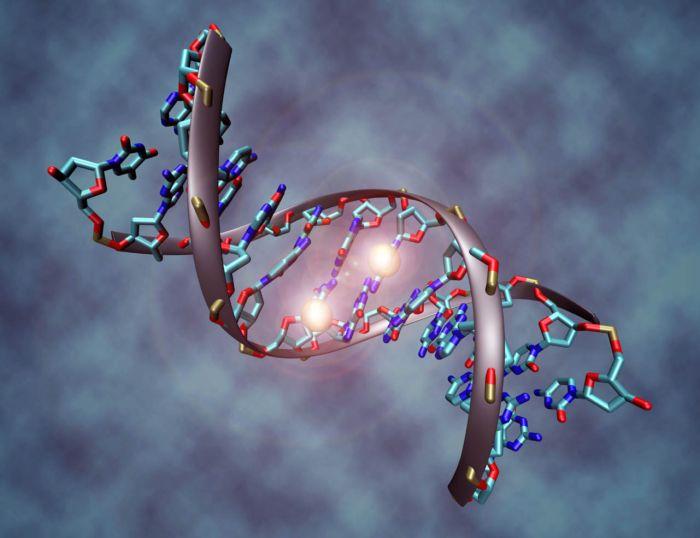 Resultado de imagen de LOS 12 FILAMENTOS DEL ADN