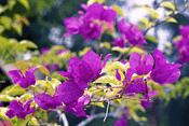 tanaman tahan panas untuk taman, tanaman tahan panas dan hujan, tanaman buah tahan panas, tanaman tahan panas matahari, tanaman hias tahan panas dan hujan, tanaman hias kuat panas, tanaman hias tahan air, tanaman hias untuk daerah panas