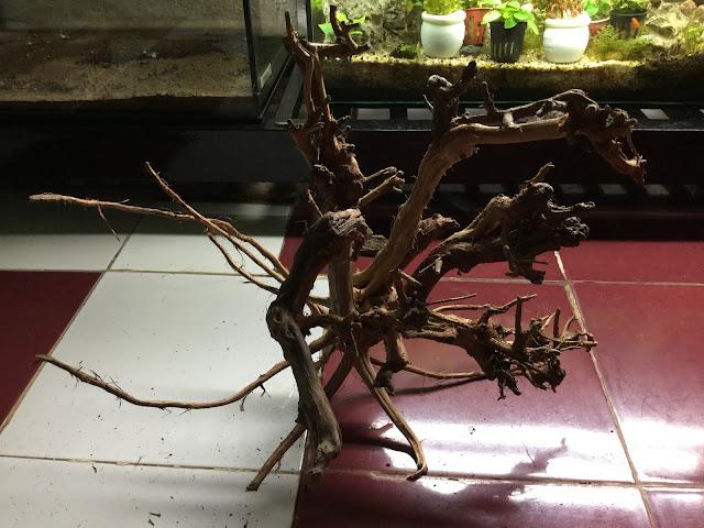 Lũa Sa Tùng nhiều cành, nhánh