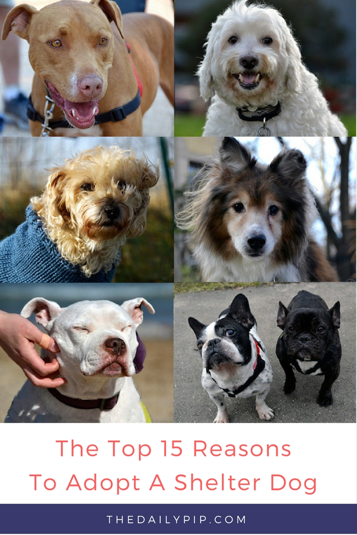 Top 15 Reasons To Adopt A Shelter Dog