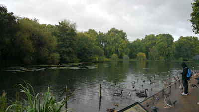 Water birds at St James's Park in London