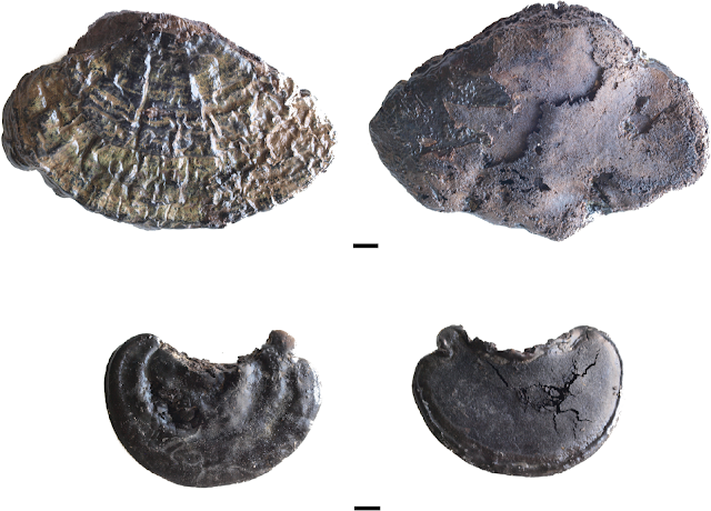 Identifying the use of tinder fungi among neolithic communities at la Draga in Catalonia