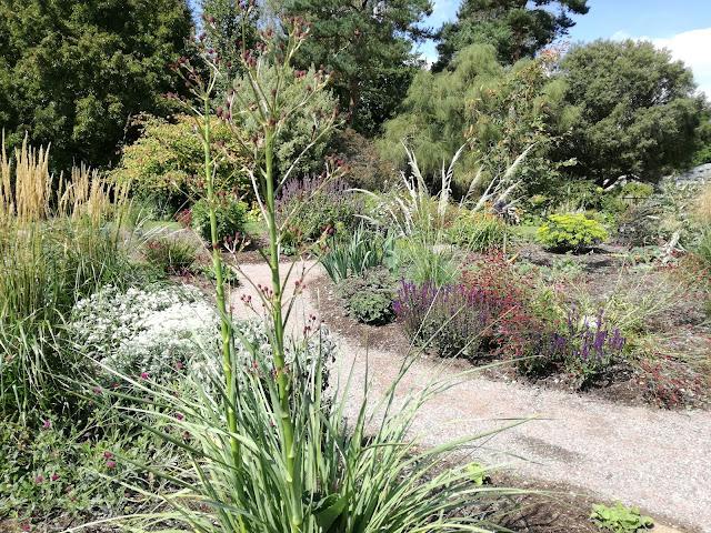 suchy, słoneczny ogród