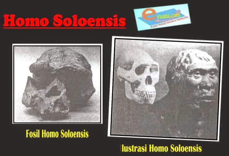 Gambar Manusia Purba Homo Soloensis