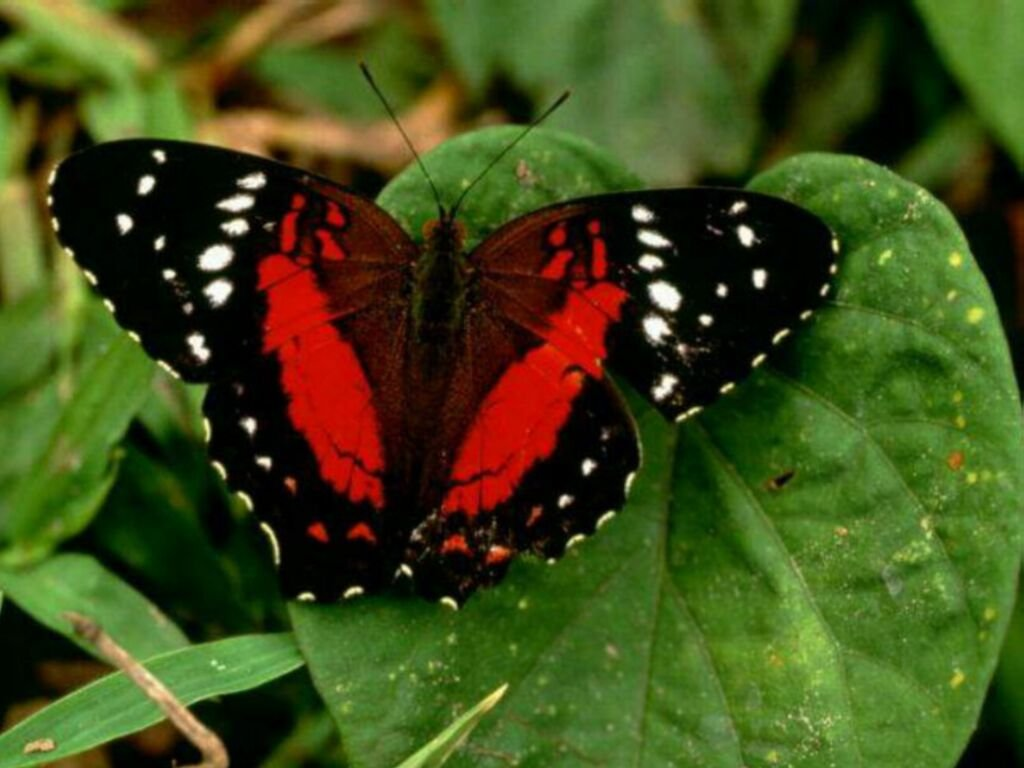 Butterfly Gallery: Butterfiles Latest Beautiful Pictures 2013